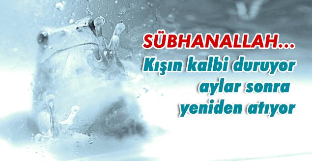 SubhanALLAH-frozen-frog-donan-agac-kurbagasi